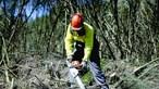 Campanha de sensibilização 'Floresta Segura 2021' da GNR arrancou esta segunda-feira